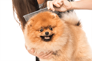 czesanie sierści psa w warszawie centrum