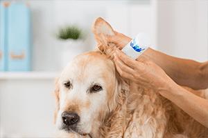 mycie uszu psa w warszawie