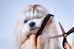 pies strzyżony w warszawie