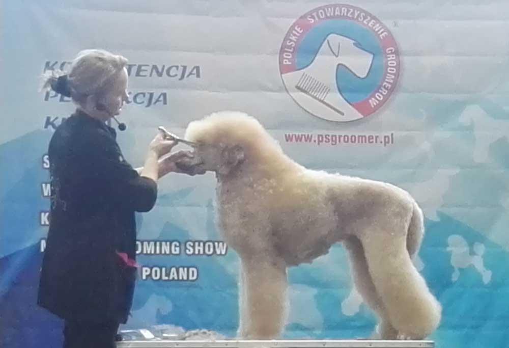 Mirjam Van den Bosch pudel VIII Master_Grooming Show_2017 Karolina Mroczek Malowany Pies strzyzenie