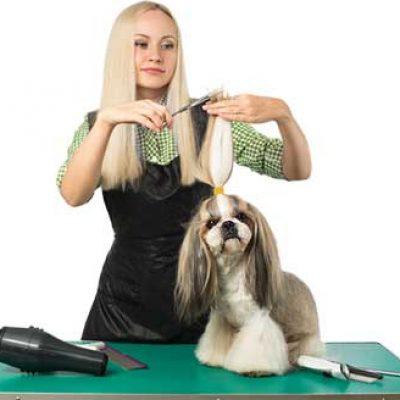 psi fryzjer warszawa srodmiescie