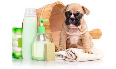 najlepszy psi fryzjer w warszawie strzyżenie psów muranów