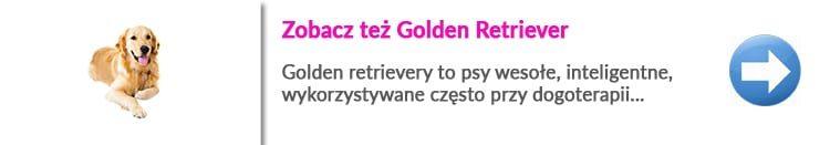 http://malowanypies.pl/wp-content/uploads/2018/10/Golden_Retriever_opis_rasy_charakterysteka_strzyzenie-750x131.jpg