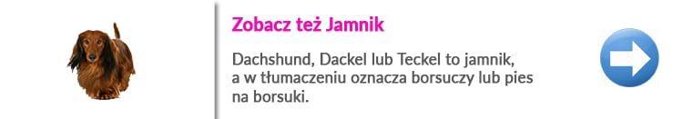 http://malowanypies.pl/wp-content/uploads/2018/10/Jamnik_szorstkowlosy_dlugowłosy_opis_rasy_strzyzenie_psa-750x131.jpg