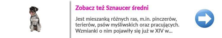 http://malowanypies.pl/wp-content/uploads/2018/10/Sznaucer_sredni_opis_rasy_i_fryzjer_dla_psa-750x131.jpg