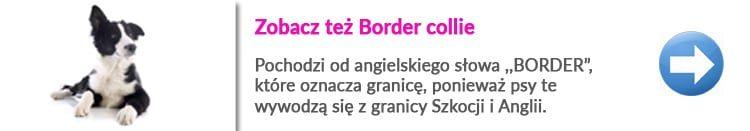 https://malowanypies.pl/wp-content/uploads/2018/10/border_collie_grooming_zobacz_opis_w_warszawie_v4-750x131.jpg