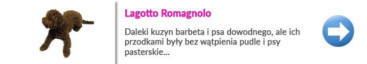 https://malowanypies.pl/wp-content/uploads/2019/01/lagotto_pielegnacja_opis_rasy_grooming-750x131.jpg
