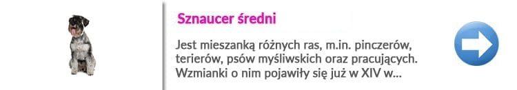 najlepszy psi fryzjer w Warszawie dl rasy sznaucer sredni