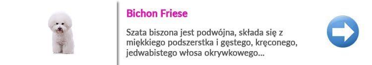 https://malowanypies.pl/wp-content/uploads/2019/07/bichon_friese_strzyzenie_w_warszawie_na_jana_pawla-750x131.jpg