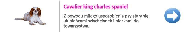 gdzie wyczesać cavaliera w Warszawie Centrum na Muranowie