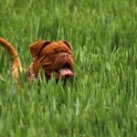 Co się dzieje z sierścią psa podczas wakacji