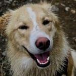 Śmierdzący problem, czyli o pielęgnacji psiej sierści